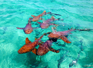 There Are A Great Variety Of Reef Types And Diving Snorkeling Experiences In Belize The Barrier Is Like Gigantic Wall Running Parallel To